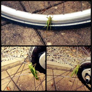 collage grasshopper